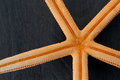 Close-up of  starfish Royalty Free Stock Photo