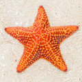 Close-up of a starfish (sea star) Royalty Free Stock Photo