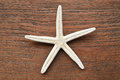 Close up of starfish Royalty Free Stock Photo