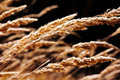 Close-up of a stems of grass at field Royalty Free Stock Photos