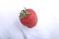 Close up strawberry in a cold ice Royalty Free Stock Photo