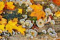 Close up texture of old wood with autumn leaf green moss and colorful fungal and lichen on it Royalty Free Stock Photo