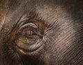 Close up thai elephant eye Royalty Free Stock Photo