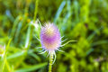 Close up of a thistle in wild flower meadow Stock Images
