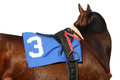 Close up thoroughbred racehorse with tack view of saddle stirrup towel and reins Royalty Free Stock Image