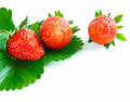 Close-up of three fresh vibrant strawberries Stock Photo
