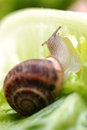 Close up to snail on green background see my other works in portfolio Stock Images