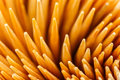 Close up toothpick background made from Royalty Free Stock Images