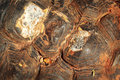 Close up of tortoise shell Royalty Free Stock Photos