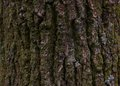 Close up of tree bark closing the moss and the texture Stock Photos