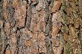 Close up on tree bark the of in sunshine Royalty Free Stock Image
