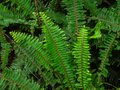Close Up Tropical Green Shrub ...