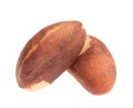Close up of two brazil nuts. Royalty Free Stock Photo
