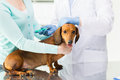 Close up of vet making vaccine to dog at clinic Royalty Free Stock Photo