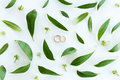 Close-up view of beautiful wedding composition with golden rings and green leaves Royalty Free Stock Photo