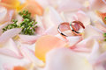 Close-up view of beautiful wedding composition with golden rings and rose petals Royalty Free Stock Photo