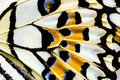 A close up view of butterfly wing texture. Royalty Free Stock Photo