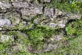 Close-up dtreailed view of the tree integument with green moss texture Royalty Free Stock Photo