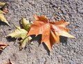 Autumn leaves on pavement background Royalty Free Stock Photo