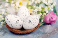 Close up view of easter eggs in a nest. Spring flowers and feathers over blue rustic wood background.