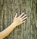 A close-up view of a hand touching the trunk and bark of a tree