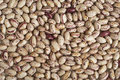 Close-up view of Italian organic Pinto beans Royalty Free Stock Photography