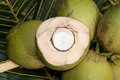 Close up view of nice fresh coconut in tropical Royalty Free Stock Photography