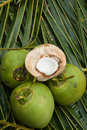 Close up view of nice fresh coconut in tropical Royalty Free Stock Photo