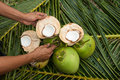Close up view of nice fresh coconut in tropical Stock Photo