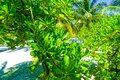 Close Up View of Tropical Palm Tree and exotic Plant on Sandy Beach Royalty Free Stock Photo