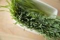 Close up wheatgrass Royalty Free Stock Photo