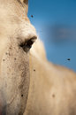 Close-up of a white beautiful horse Royalty Free Stock Photo