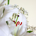 Close up white calla lilly shallow depth field Royalty Free Stock Photography