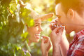 Close up of winemakers tasting grapes in vineyard bunch green hanging from vine with male and female winemaker Stock Photo