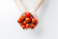 Close up of woman hands holding cherry tomatoes Royalty Free Stock Photo