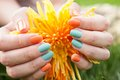 Close up of woman s hands on flower with nail varnish Royalty Free Stock Photo