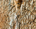 Close-up wooden cut textur Stock Photography
