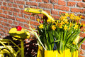 Close-up yellow bicycle with basket of daffodil flowers on rustic brick wall background Royalty Free Stock Photo