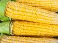 Close-up yellow corn Stock Photos