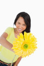 Close-up of a yellow Gerbera holding by a young woman Stock Photos