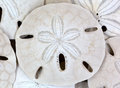 Close view of old sand dollars Stock Photos
