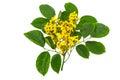 Closed Up Yellow Flower Of Bur...