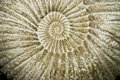 Closeup of ammonite fossil Stock Images