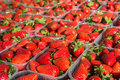 Closeup of appetizing red strawberries in transparent plastic containers Stock Images