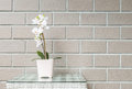 Closeup artificial plant with white orchid flower on pink flower pot on wood weave table on blurred brown brick wall texture backg Royalty Free Stock Photo