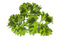 Closeup av parsley Royaltyfria Bilder