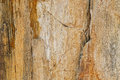 Closeup background texture photo of petrified ancient wood Royalty Free Stock Photo