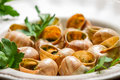Closeup of baked snails with garlic butter and parsley on old wooden table Stock Photo