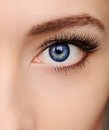 Closeup beautiful blue woman eye with long salon lashes looking Royalty Free Stock Photography