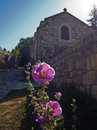 Closeup of a beautiful flower in front of a church at kalemegdan fortress belgrade serbia Royalty Free Stock Photography